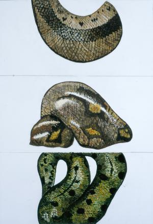 Etude de serpent